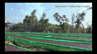Myanmar's Coffee - New Origin