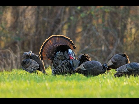 Turkey Hunting In Middle Tennessee