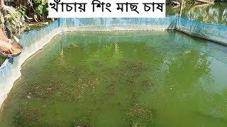 খাঁচায় দেশি শিং মাছ চাষ / catfish cage culture