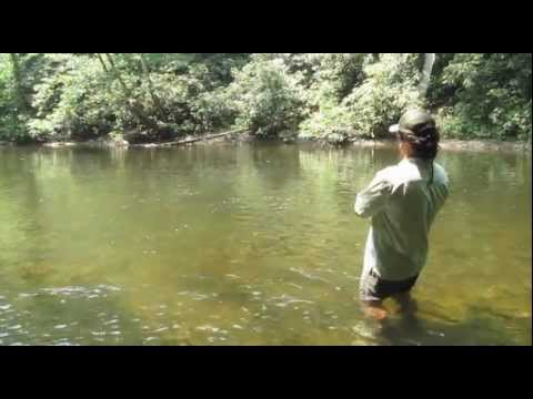Smoky Mountain Fly Fishing Video Blog - Fishing With Poppers For Smallmouth Bass