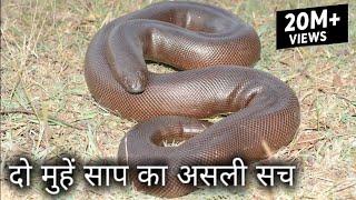25 करोड़ में बिकने वाला दो मुहां साप का असली सच, Rescue red sand boa from Ahmednagar