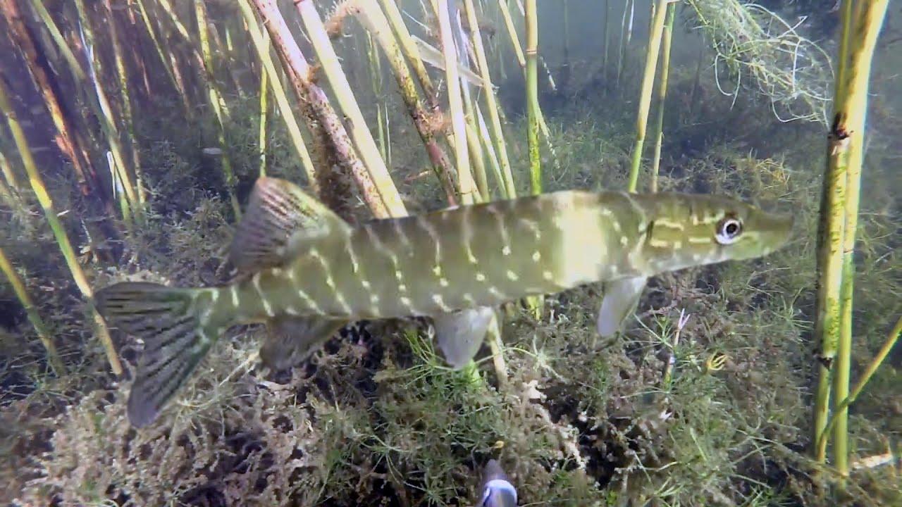 подводная охота #11 под солнцем на озере