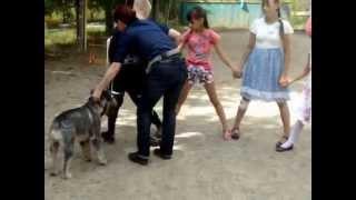 собаки в гостях у детей из детского дома п.Переяславка