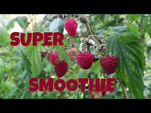 Super Healthy Breakfast Smoothie From Local Organic Fruit