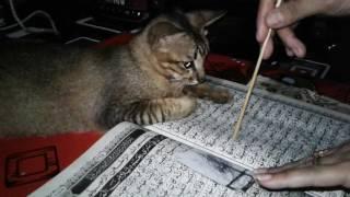 Kucing belajar ngaji Mp3