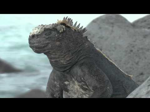Galapagos: Charles Darwin's Big Adventure - Trailer