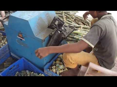 Advance agri Sugarcane Cutting Machine