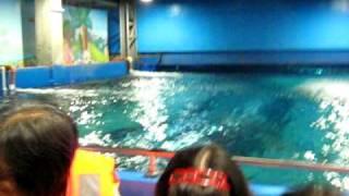 marine life with kuya marine BIOman
