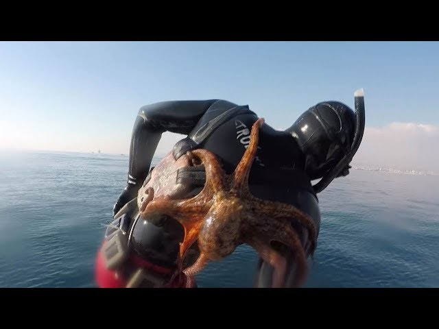 Clingy Octopus Sticks To Divers Back