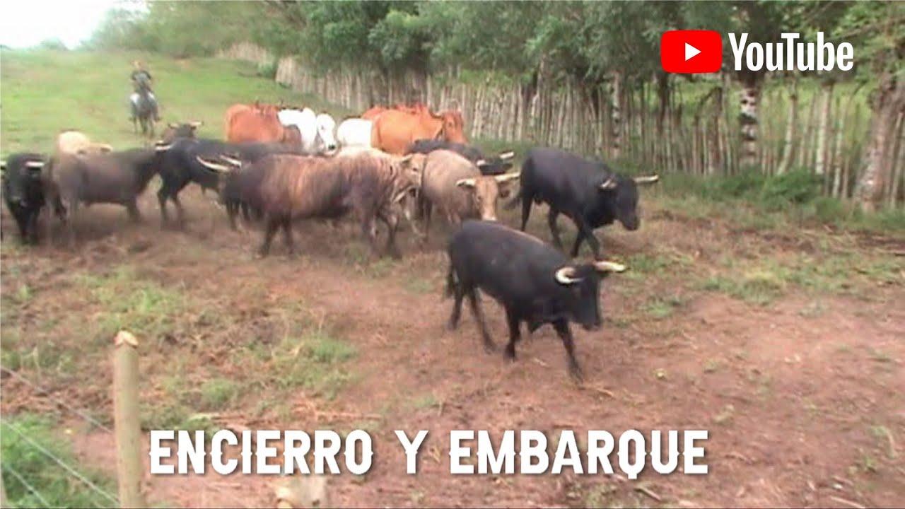 ENCIERRO Y EMBARQUE DE LOS TOROS DE LA GANADERÍA LA VALENTINA