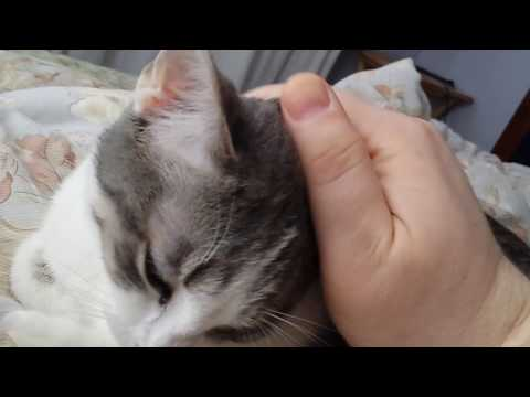 Adorable purry kitten Patty squeaks when I stop petting her