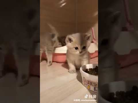 Cat Series: 4 kittens and their new house