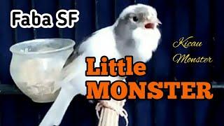 Little Monster Kenari Panda Tan FABA SF
