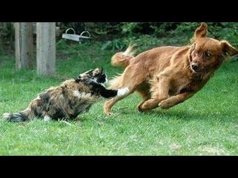Cats Annoying Dogs Funny And Cute Dog Cat Compilation YouTube - Dogs annoying cats with friendship