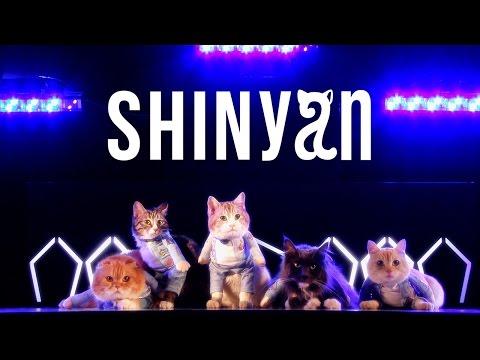 SHINyan - 「君のせいで for cat」 Music Video