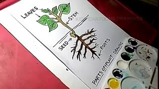 How to Draw Plant Anatomy Drawing for Kids