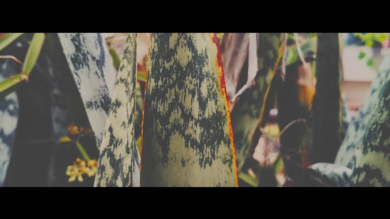 Save Plants Save Yoursef-High Plants - Sam Kolder Style
