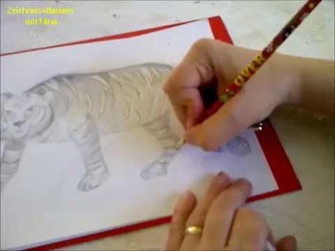 Zeichnen Lernen Für Anfänger Wilde Tiere Maleneinen Tiger Malen