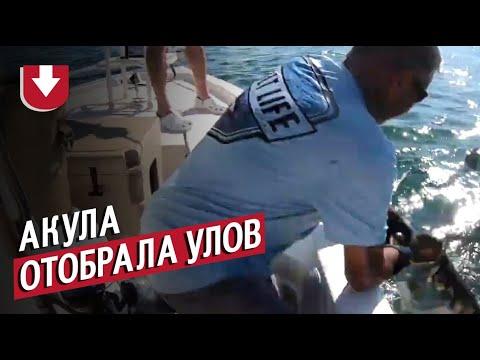 Акула-молот вырвала улов из рук рыбака!