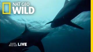 Shark Park | Shark Attack Experiment Live!