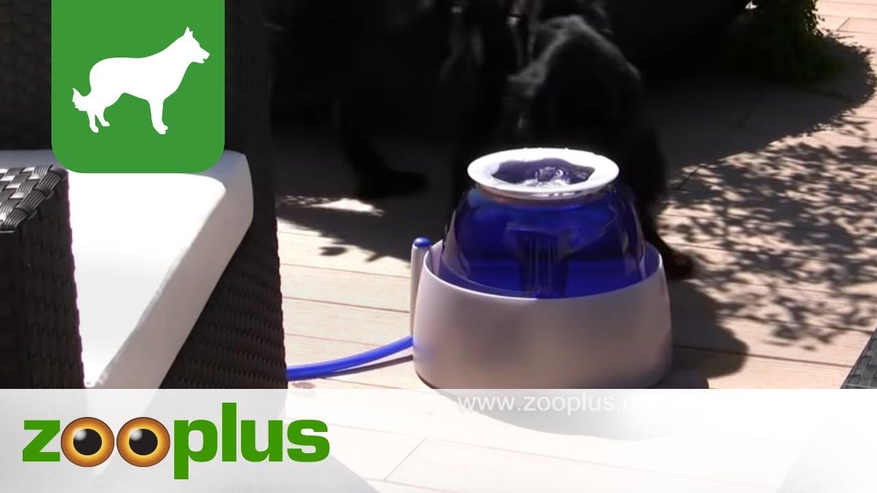 Hagen Dogit große Hundetränke 10,5 l - YouTube