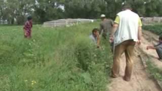 пос. Турово, Серпуховского района.(Нелегалы сливают содержимое туалетов в местную реку., 2010-07-29T12:43:49.000Z)