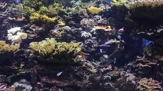 Аквариум в Нью-Йорке / New York Aquarium