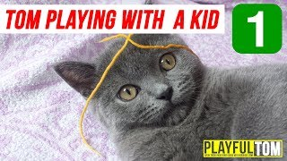 Funny Cat Video Try Not To Laugh - Part #1 | Playful Tom