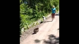 Кот нападает на собаку.
