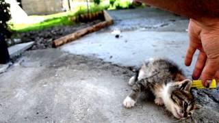 cat как выключить кота