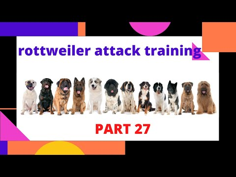 rottweiler-attack-training-the-rottweiler-fiction-part-27-how-to-train-your-dog
