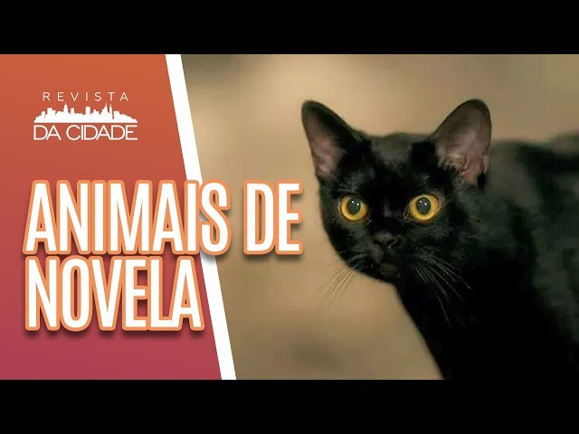 Conheça os Animais que roubaram a cena em novelas -  Revista da Cidade (05/03/19)