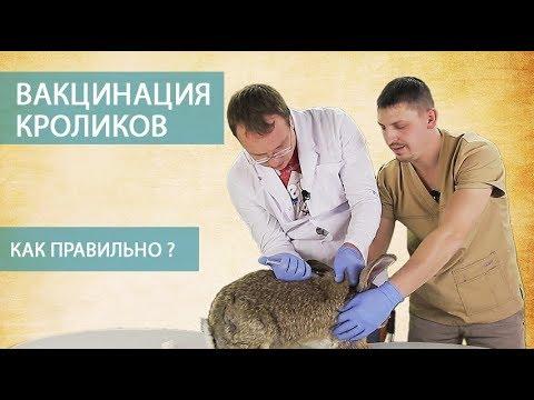 Как делать прививки кроликам видео
