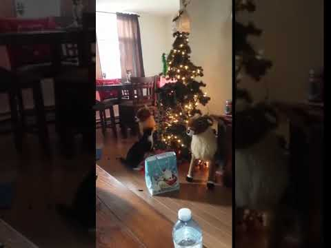Cat Tips Over Christmas Tree - 1011339