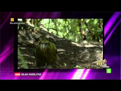 El Kakapo (El Pajaro Idiota)