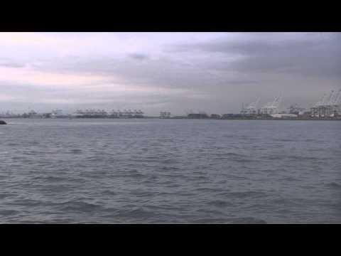 Harbor Breeze Gray Whale & Dolphin Cruise, Long Beach, California, USA