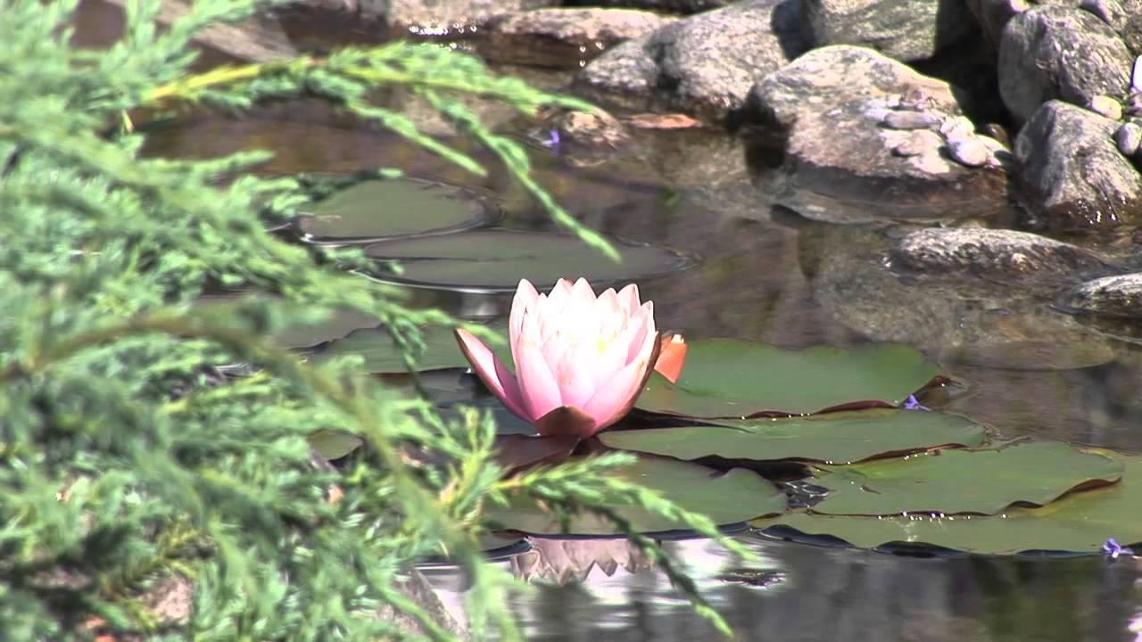 Teich Bepflanzen Wasserpflanzen Teichebenen