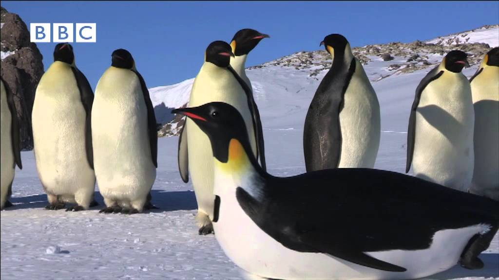 "ROBOT PENGUINCAM MEETS EMPEROR PENGUINS FROM ""PENGUINS - SPY IN THE HUDDLE"""