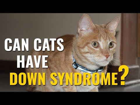 Cats with Down Syndrome - A Complete Guide