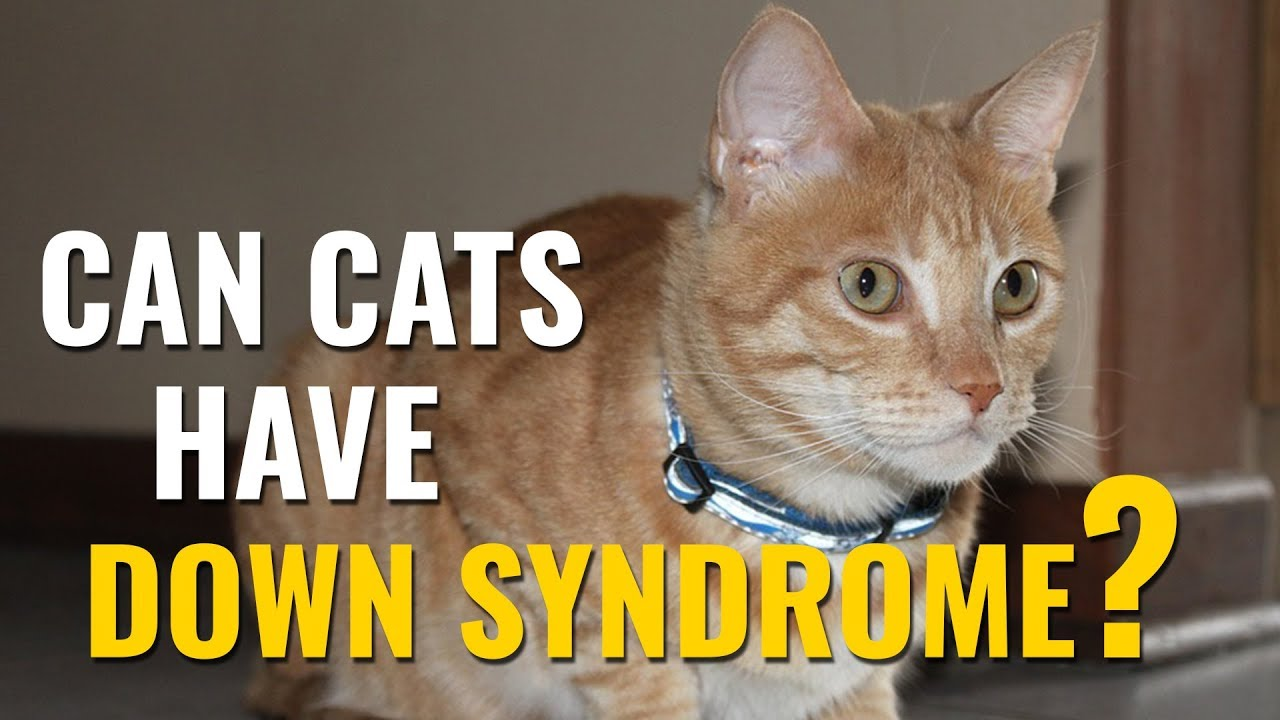 Cats With Down Syndrome , A 360 Degree Understanding , Petmoo
