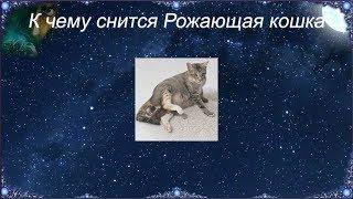 К чему снится Рожающая кошка (Сонник)