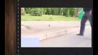 ШОК! Доброта еще существует) Лови улыбку) Угарный ржач Смешные приколы с животными и людьми prikoli
