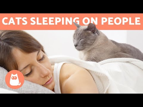 Why Does My CAT SLEEP On TOP Of ME? 🐱 Is It SAFE?