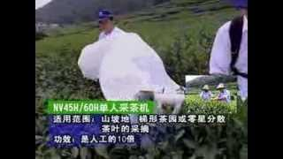 SINGLE MAN TEA HARVESTING MACHINE / TEA PLUCKING MACHINE