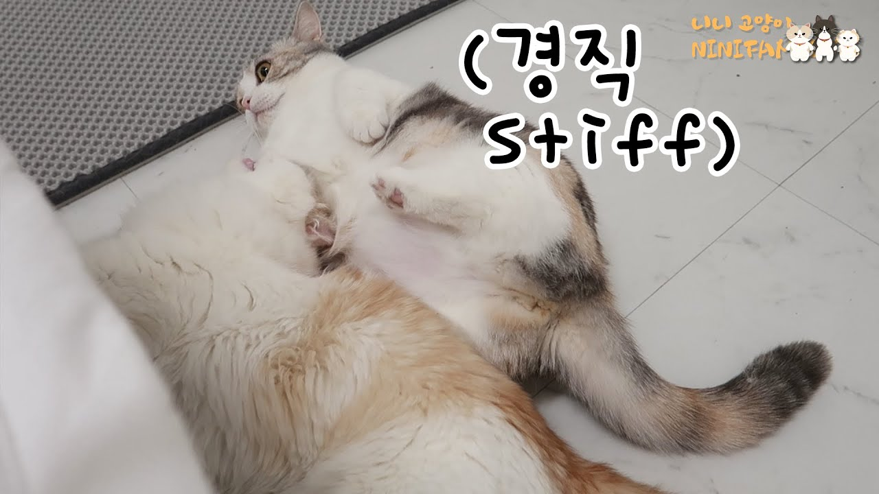 Due to the Sudden Attack, Xuni Became Sitff!