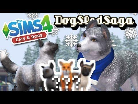 Snowy Surprise Of Silver Fox & Husky Puppies?! 🐶🎄