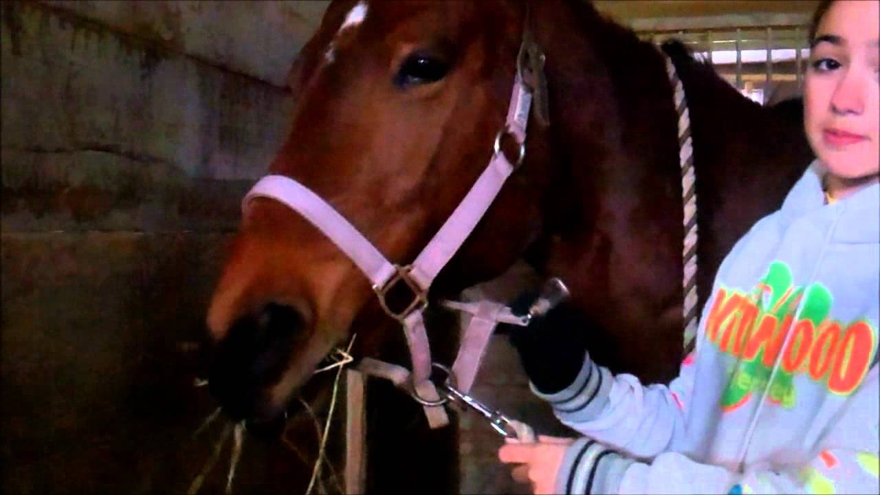 Discussion on this topic: How to Halter a Horse, how-to-halter-a-horse/
