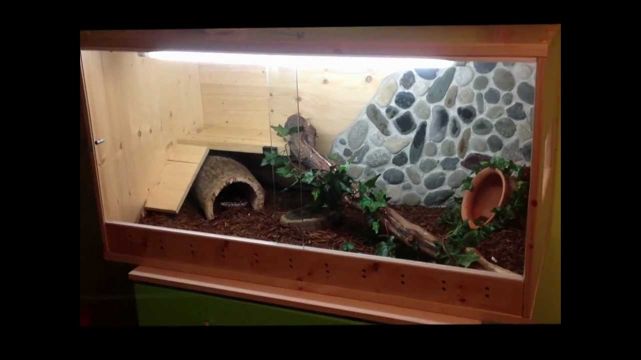 Ball Python In Cage