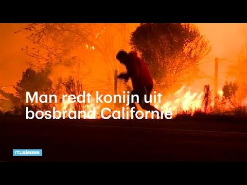 Man redt konijn uit bosbrand Californië - RTL NIEUWS