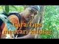 Cara mencari kelulut Itama/4 log suda memadai_kudat Sabah